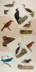 Books:Natural History Books & Prints, [Natural History Illustrations] Lot of Ten Hand-Colored Illustrations of Birds From the United States Pacific Rail Road Survey...