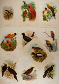 "Books:Natural History Books & Prints, [Natural History Illustrations] Group of Ten Superb Color Lithograph Illustrations of Various Types of Birds. 8.75"" x 12.5""...."