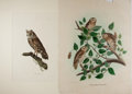 """Books:Natural History Books & Prints, [Natural History Illustrations] Pair of Hand-Colored Illustrations of Owls. 20"""" x 26.5"""" and 17.5"""" x 23"""". Closed tears and ch..."""