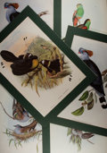 Books:Prints & Leaves, [Color Printing]. Lot of Six Later Color Reproduction Prints of Gould's Birds. Approximately 20 x 15 inches. Light blemishes...
