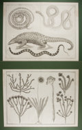 """Books:Natural History Books & Prints, [Natural History Prints] Pair of Superb Engraved Natural History Prints. 26"""" x 20"""". Removed from a folio volume. Matted. Cen..."""