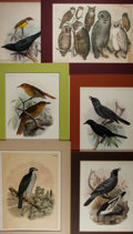 "Books:Natural History Books & Prints, [Natural History Illustrations] Lot of Six Hand-Colored Lithographs of Various Birds. Various sizes from 9.25"" x 12"" to 15"" ..."