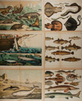 """Books:Natural History Books & Prints, [Natural History Illustrations] Lot of Six Colored Illustrations of Various Sea Creatures. 16.25"""" x 12.75"""". Removed from a l..."""