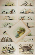 "Books:Natural History Books & Prints, [Natural History Illustrations] Group of 15 Vintage Color Lithograph Illustrations of Various Bird Types. 14.5"" x 11.5"". Rem..."