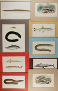 Books:Natural History Books & Prints, [Natural History Illustrations] Group of Nine Antique Hand-Colored Engraved Illustrations of Various Fish and Eels. Matted t...