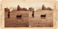 Photography:Stereo Cards, Annie Oakley: Personally Inscribed 1891 Stereoview of AnnieShooting in the Arena. ...