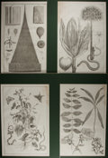 Books:Prints & Leaves, [Natural History Prints] Lot of Four Large Etched AntiqueIllustrations of Various Plants. Matted to an overall size of16.5...