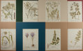 "Books:Natural History Books & Prints, [Natural History] Lot of Eight Hand-Colored Illustrations of Flowers. Matted to an overall size of 12.5"" x 15"". A bit of ton..."