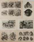 """Books:Natural History Books & Prints, [Natural History] Group of Six German Lithographs Featuring Various Species of Monkeys. Various sizes from 9.5"""" x 6.25"""" to 1..."""