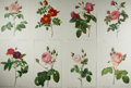 Books:Natural History Books & Prints, [Natural History] Lot of Eight Chromolithographic Illustrations of Flowers After Works by Pierre-Joseph Redouté (1759-1840)....