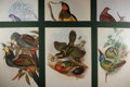 Books:Natural History Books & Prints, [Natural History] Lot of Six Superb Color Lithograph Illustrations of Various Birds by John Gould. Uniformly matted to an ov...