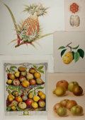"""Books:Natural History Books & Prints, [Natural History Prints] Five Color Lithographs Featuring Various Types of Fruit. Various sizes from 5.75"""" x 9"""" to 21"""" x 16""""..."""