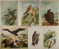 "Books:Natural History Books & Prints, [Natural History] Lot of Six Colored Illustrations of Birds. Various sizes from 8"" x 11"" to 16.25"" x 13"". Removed from large..."