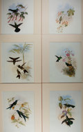 """Books:Natural History Books & Prints, [Natural History] Lot of Six Superb Hand-Colored Lithograph Illustrations of Hummingbirds by John Gould. 9.75"""" x 14.25"""", uni..."""
