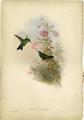 Prints:European Modern, JOHN GOULD AND H.C. RICHTER (British, 1804-1881). SaucerottiaCyanifrons. Colored lithograph. 21.25 x 14.75in.(both pages). ...