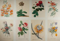 "Miscellaneous:Ephemera, Group of Eight Floral Prints. Each exquisitely colored leafmeasures 12.25"" x 17"". Fine.. ..."