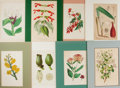 """Miscellaneous:Ephemera, Group of Eight Floral Prints. Matted to an overall size of 9.5""""12.75"""", hand-colored.. ..."""