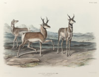 JOHN JAMES AUDUBON (American, 1785-1851) Prong-Horned Antelope Plate LXXVII from The Viviparous Q