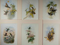 Books:Natural History Books & Prints, [Ornithology Prints] Lot of Six Superb Modern Reproduction Color Illustrations of Hummingbirds by John Gould (1804-1884). 13...