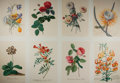 Books:Natural History Books & Prints, [Botanical Prints] Lot of Eight Color Lithograph Illustrations of Flowers by Artist Georg Dionysius Ehret (1708-1760). 12.25...