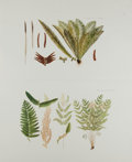 """Books:Natural History Books & Prints, [Botanical Prints] Pair of Color Lithograph Illustrations of Flowers. 16.5"""" x 10"""". Fine...."""