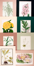 Books:Natural History Books & Prints, [Botanical Prints] Lot of Eight Hand-Colored Prints of Various Types of Flowers. Matted to an overall size of approximately ...