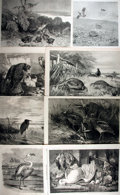 Books:Natural History Books & Prints, [Natural History Illustrations] Lot of Eight Illustrations of Birds From The Illustrated London News, Circa 1860-1...