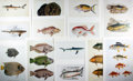 "Books:Natural History Books & Prints, [Natural History] Lot of Ten Chromolithograph Illustrations of Various Fish. 10"" x 14"", removed from a larger volume. Very g..."