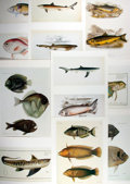 "Books:Natural History Books & Prints, [Natural History Prints] Lot of Ten Chromolithograph Illustrations of Various Fish. 10"" x 14"". Removed from S. Peter Dance a..."