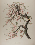 "Books:Natural History Books & Prints, [Natural History Prints] ""Japanese Apricot"" Limited Edition Print. 19"" x 26.5"". Published by the British Museum of Natural H..."