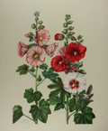 "Books:Natural History Books & Prints, [Natural History Prints] Fabulous Lithograph Print ""Hollyhocks"" by Edith Farrington Johnston. 20"" x 25.5"". Copyright 1943 b ..."