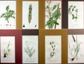 """Books:Natural History Books & Prints, [Natural History] Lot of Eight Color Lithograph Illustrations of Various Flowers. Matted to an overall size of 9"""" x 12.75"""". ..."""