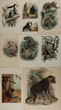 Books:Natural History Books & Prints, [Natural History Illustrations] Large Lot of Eight Color Lithograph Illustrations of Various Types of Monkeys. Various sizes...