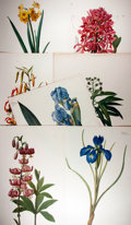 "Books:Natural History Books & Prints, [Natural History Illustrations] Lot of Seven Color Lithograph Illustrations of Various Types of Flowers. 13.75"" x 20"". Very ..."