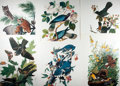 "Books:Natural History Books & Prints, [Natural History Prints] Six Color Lithograph Prints of Various Types of Birds. 14"" x 17"". Fine...."