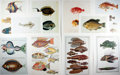 "Books:Natural History Books & Prints, [Natural History Illustrations] Lot of Ten Color Illustrations of Various Types of Fish. 10"" x 14"". Fine condition...."