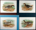 Books:Natural History Books & Prints, [Natural History Illustrations] Lot of Four Color Lithograph Illustrations of Various Types of Geese After Works by Frederick ...