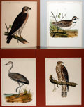 Books:Natural History Books & Prints, [Natural History Illustrations] Lot of Four Hand-Colored Illustrations of Birds From the United States Pacific Rail Road Surve...