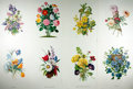 Books:Prints & Leaves, [Botanical Prints]. Georg Dionysius Ehret, James Andrews, andothers. Lot of Eight Color Reproductions of Lithograph Illustrat...