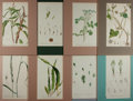 Books:Prints & Leaves, [Botanical Prints]. Group of Eight Color Lithograph BotanicalPrints. Matted to 9 x 12.75 inches. Fine condition....
