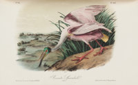 John James Audubon. The Birds of America, From the Drawings Made in the United States and Th