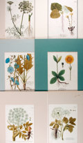 Books:Prints & Leaves, Six Hand-Colored Lithographs Depicting Flowers. Uniformly matted toan overall size of 15 x 12.5 inches. Some mats are detac...