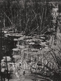 EUGÈNE ATGET (French, 1857-1927) Nymphéas (Water Lilies), circa 1910 Gelatin silver, printed by Bere