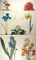 "Books:Natural History Books & Prints, [Natural History Prints] Lot of Seven Beautiful Color Lithograph Illustrations of Flowers. 13.5"" x 20"". Minor toning, else v..."