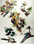 """Books:Natural History Books & Prints, [Natural History Prints] Lot of Five Color Lithograph Prints of Various Birds. 14"""" x 17"""". Suitable for framing and in near f..."""