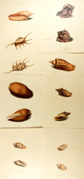 """Books:Natural History Books & Prints, [Natural History Prints] Lot of Eight Color Lithograph Prints of Various Shells. 8.75"""" x 11.75"""" in portrait and landscape fo..."""