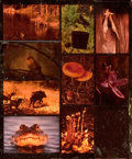 Books:Photography, [American Heritage]. Group of Transparencies of Texas Big Thicket Flora and Fauna. Appeared in American Heritage Magazine Ju...