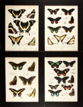 Books:Prints & Leaves, W. Purkiss. Group of Four Chromolithographs of Butterflies. N.d.,ca. late-19th century. Matted to an overall size of 1...
