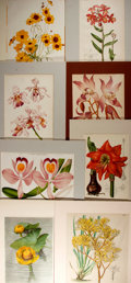Books:Prints & Leaves, Group of Eight Floral Prints. Sizes vary from 10 x 13 inches to 12x 15 inches. Tipped onto backing and matted. Primarily ch...