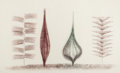 Fine Art - Work on Paper:Print, HARRY BERTOIA (American, 1915-1978). Four Sculptures, circa1960s. Monoprint on rice paper. 24 x 38-1/2 inches (61.0 x 9...